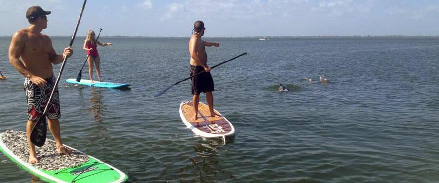 Manatee and dolphin tours near Cocoa Beach, FL