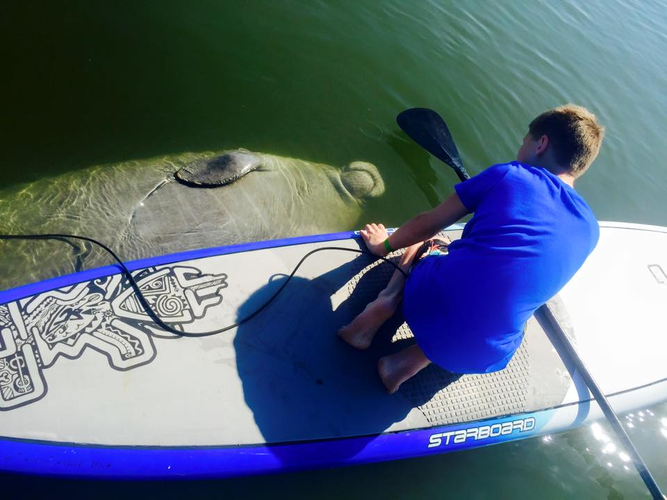 Manatee Nature Tours Merritt Island Cocoa Beach Orlando standup paddle board tours kayak tours sobesurf