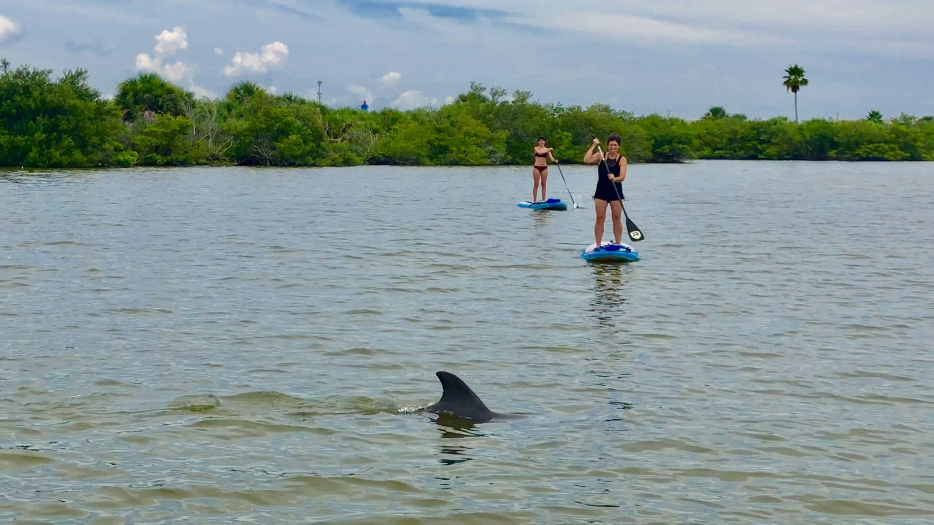 SoBe Surf Nature Tour dolphin Tour Kayak Tour Paddle Board Tour