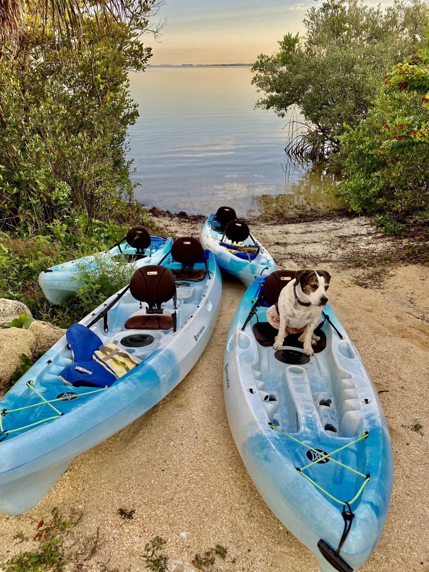 Kona Dog sitting in Kayak SoBe Surf & Paddle waterfront kayak rentals